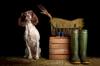 The Gloucester Dog Photographer